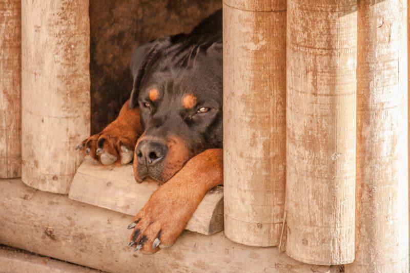 napelemes kutyaház